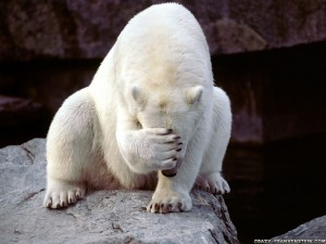 polarbear_facepalm